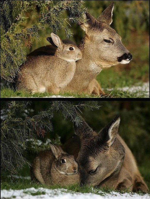 Forest Interspecies Love deer cuddling rabbit bunny squee