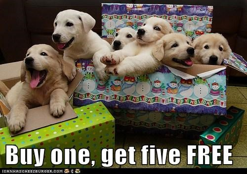 deal dogs labrador puppies sale christmas presents holidays - 6814919936