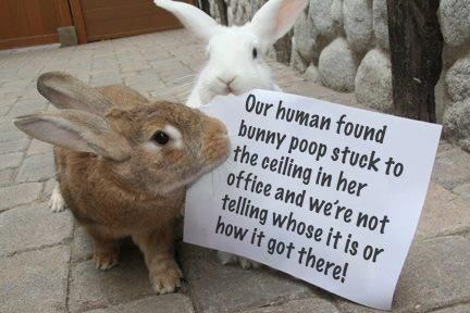 bunnies Funny Bunny shaming - 6815237