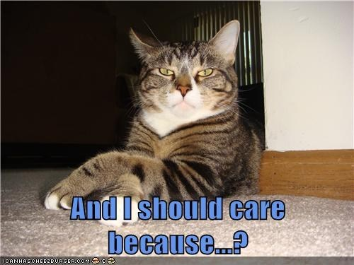 i dont care care captions caring grumpy lolwork Cats - 6815427328