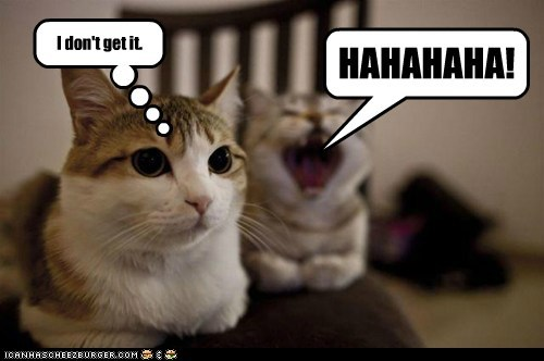 haha captions laugh joke Cats - 6815456256