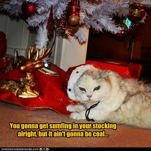 christmas,stocking,christmas tree,captions,coal,Cats