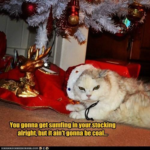 christmas stocking christmas tree captions coal Cats - 6815651840
