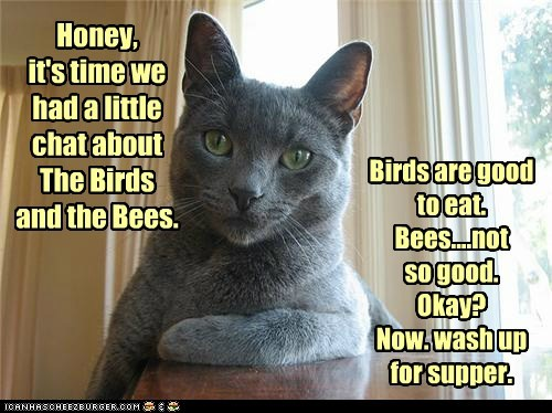 Honey, it's time we had a little chat about The Birds and the Bees. Birds are good to eat. Bees....not so good. Okay? Now. wash up for supper.