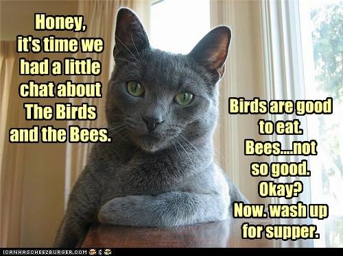 sex child talk captions parent Cats - 6815729408