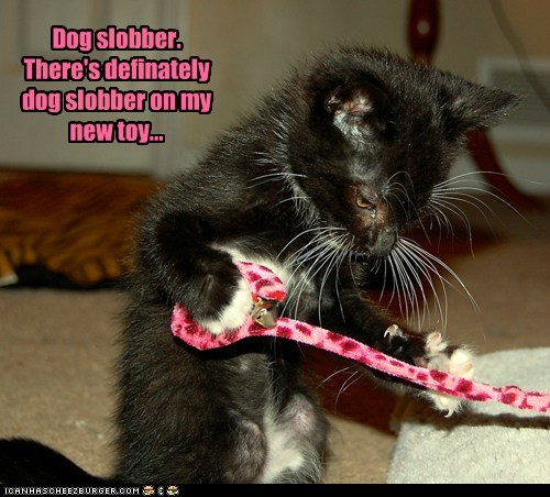 Dog slobber. There's definately dog slobber on my new toy...