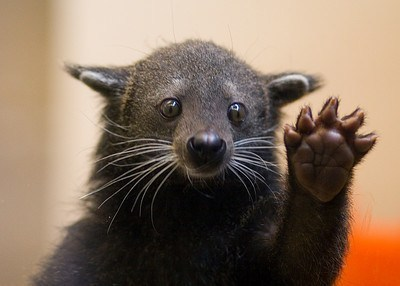 compliment,bearcat,high five,squee spree,squee