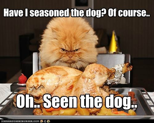 dogs cook captions nom eat Turkey food Cats season