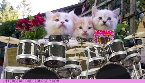 Three Kitten Band Experience