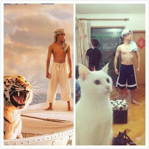 look alikes,life of pi,tigers,movies,remakes,parodies,Cats,budget
