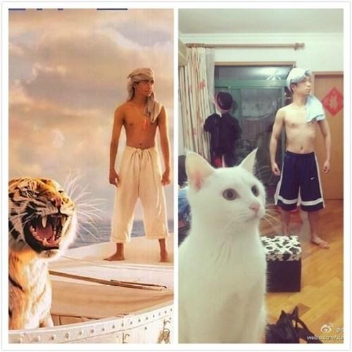 look alikes tigers movies parodies Cats budget - 6816028416