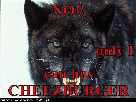 Cheezburger Image 6816056064