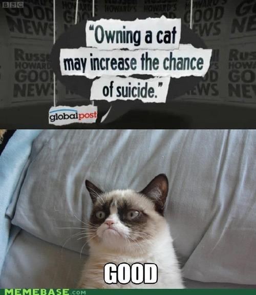 tardar sauce Grumpy Cat an hero - 6816073472
