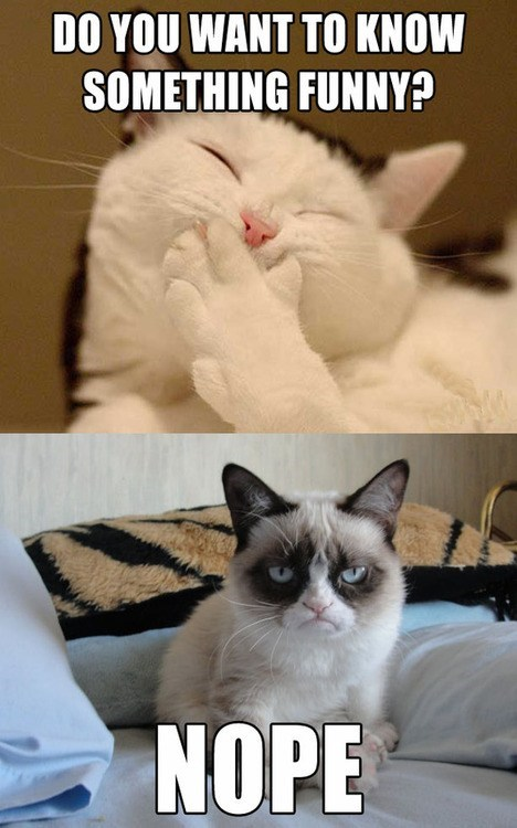 jokes nope captions Memes no Grumpy Cat tard Cats funny - 6816082176