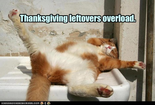 Thanksgiving leftovers overload.