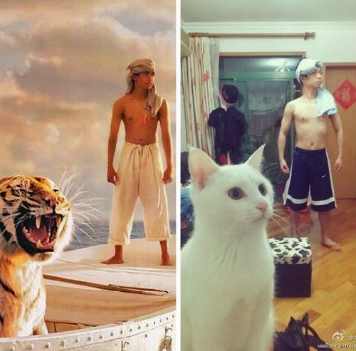 life of pi Movie re-creation Cats Hall of Fame best of week - 6816393728