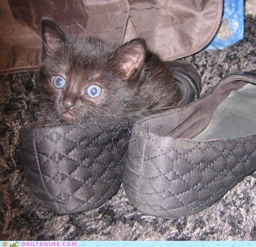 shoes kitten reader squee pets if i fits i sits Cats squee