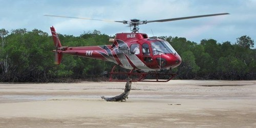 crocodile australia helicopter animals Hall of Fame best of week - 6816595456