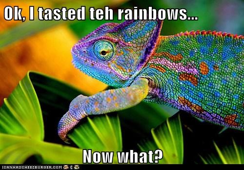 now what,colors,taste the rainbow,chameleon,lizard