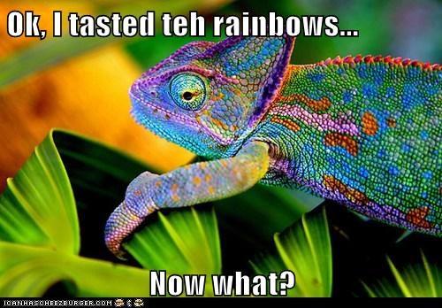 now what colors taste the rainbow chameleon lizard - 6816937984