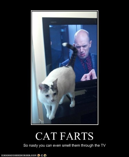 CAT FARTS So nasty you can even smell them through the TV