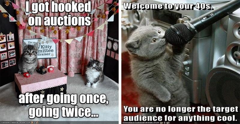 users funny memes Memes lol cats Cats cat memes - 6818309