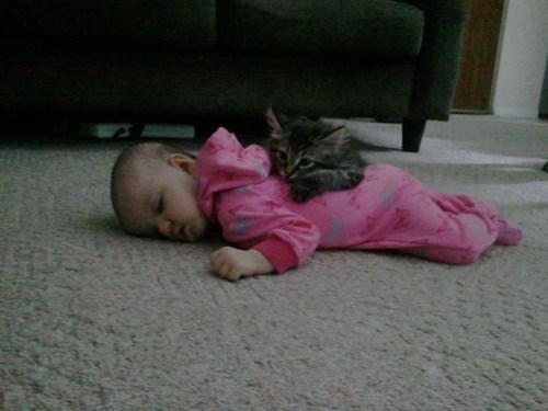 daww baby adorable nap time kitty - 6818467584