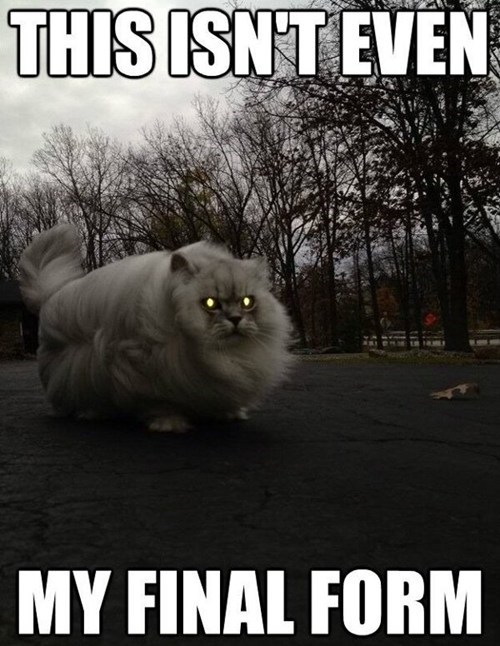 scary this-isnt-even-my-final-form creepy captions Memes Dragon Ball Z Cats - 6818514176