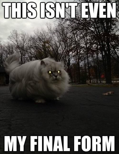 scary creepy captions Memes Cats - 6818514176
