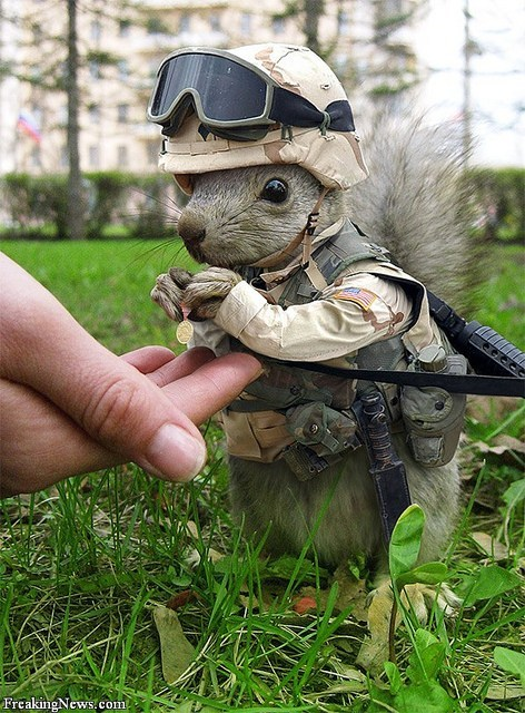 military,squirrels