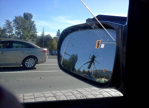 attack of the giant bug,bugs,rear-view mirror,praying mantis,giant bugs
