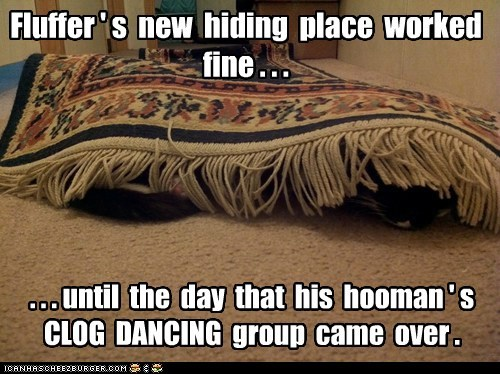 Fluffer ' s new hiding place worked fine . . . . . . until the day that his hooman ' s CLOG DANCING group came over .
