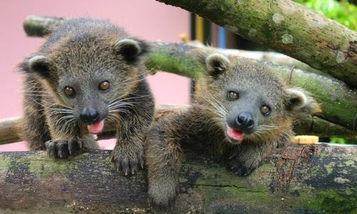 Babies hanging out smiling bearcat climbing squee spree squee - 6819066880