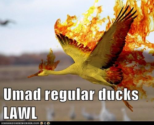 Umad regular ducks LAWL