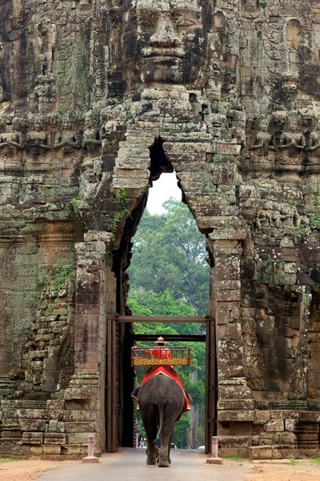 journey,elephant,temple,gate