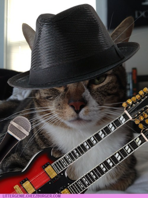 Music photoshopped rockstars Cats litter genie - 6819202560