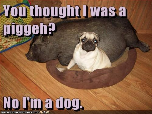 Cheezburger Image 6819251968