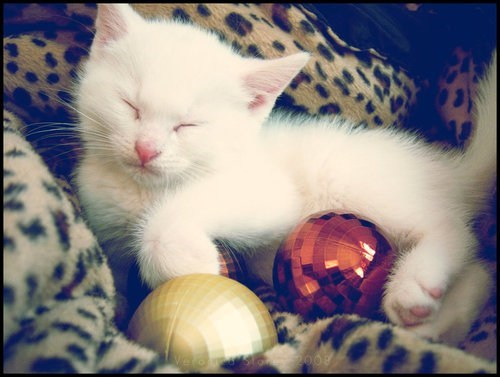 cyoot kitteh of teh day christmas kitten ornaments mirror balls Cats - 6819482112