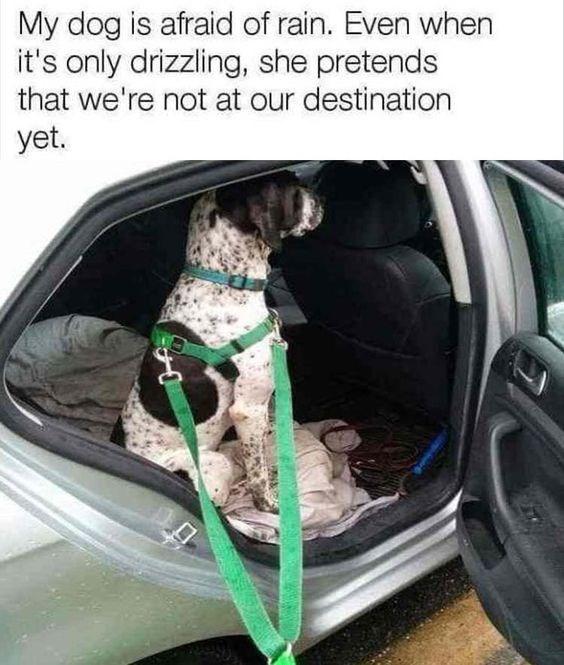 hate dogs dog memes funny memes Memes rain - 6819589