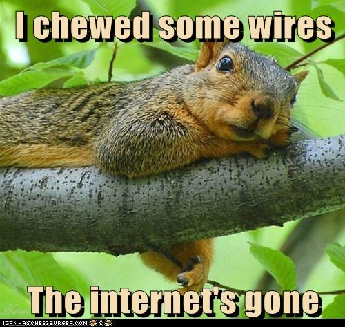 wires gone chewed internet squirrel - 6819693312