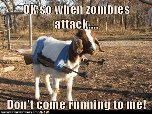 prepared guns zombie attack goats