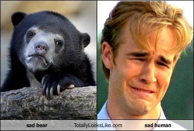 sad bear Totally Looks Like sad human