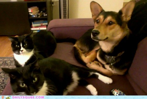 dogs reader squee pets couch Cats squee