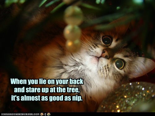 When you lie on your back and stare up at the tree, it's almost as good as nip.