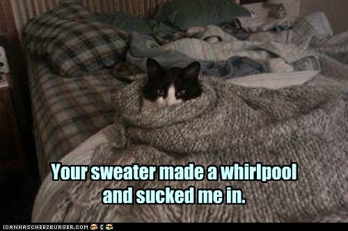 whirlpool captions trapped sweater suck Cats