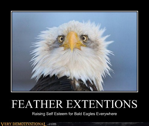FEATHER EXTENTIONS Raising Self Esteem for Bald Eagles Everywhere