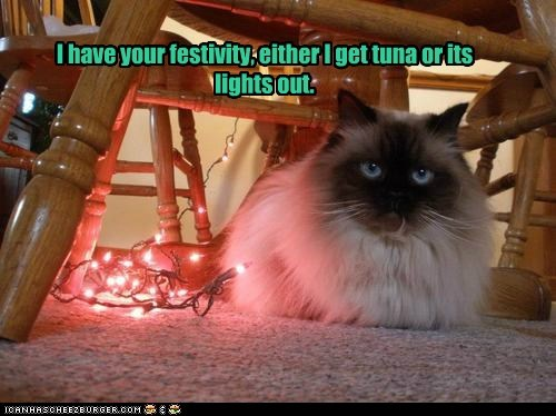 I have your festivity, either I get tuna or its lights out.