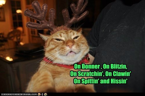 christmas,reindeer,captions,Cats,rudolph