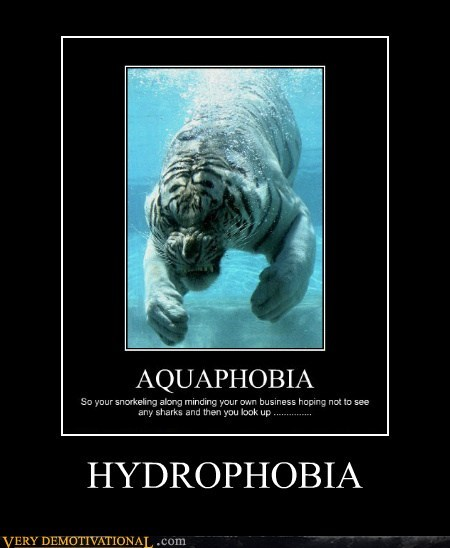 water,tiger,hydrophobia