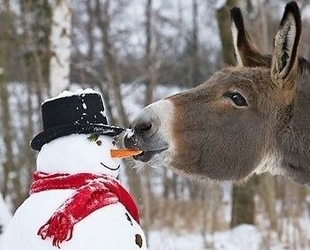 snow donkey snacks winter squee carrots snowman